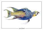 James Prosek: Un-Natural History Postcard by Bellarmine Museum of Art